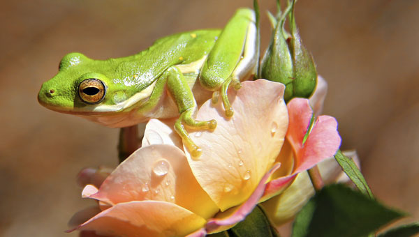0614-tree-frog