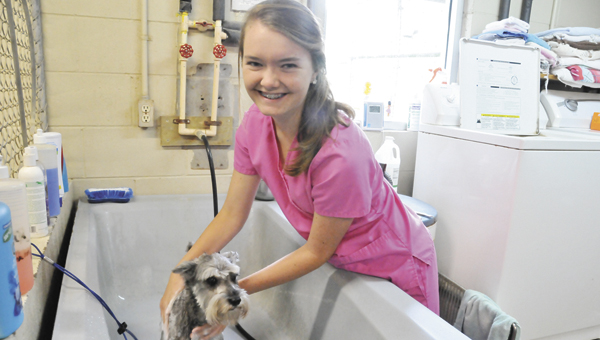 Sarah Atkinson is working alongside her dad, Dr. Toby, this summer at Andalusia Animal Clinic.    Andrew Garner/Star-News