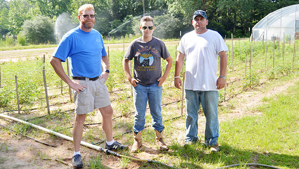 Top: Tiffany Hooker and Tammy Strickland help pick blueberries. Above: Red Coleman, Dale Coleman and Chad Little take a break from working. Red's son Dale comes out to the farm to help quite a lot.